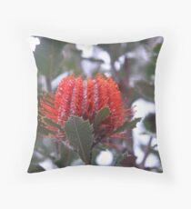 Banksia Coccinea (Scarlet Banksia) Throw Pillow