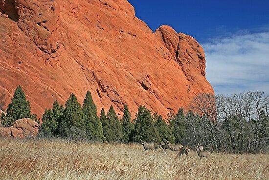 Red Rock Deer by Ken Lowden
