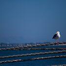 Bird on a rope by Josef Grosch