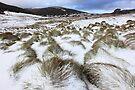Grass Tussocks, Cradle Mountain National Park, Tasmania, Australia by Michael Boniwell