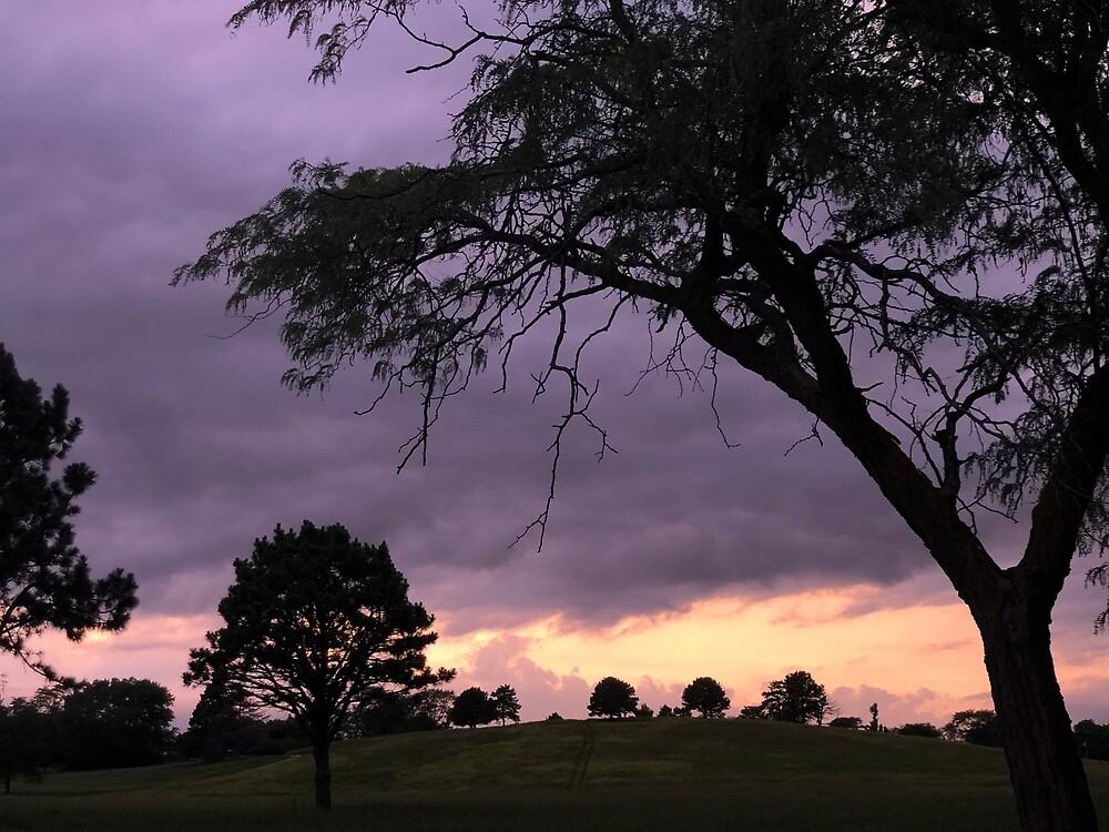 Nebraska Sunset Over Tree Hill by EricaRobbin
