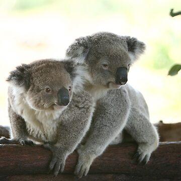 energetic and sleepy koalas by yelys