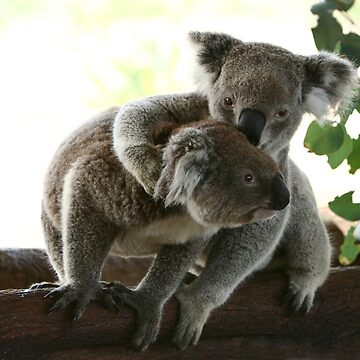 2 koalas on a tree by yelys