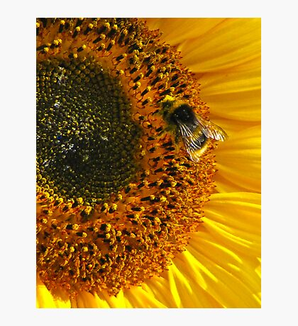 Very Busy Bee! Photographic Print