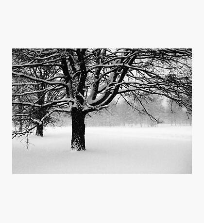 Snowing Photographic Print