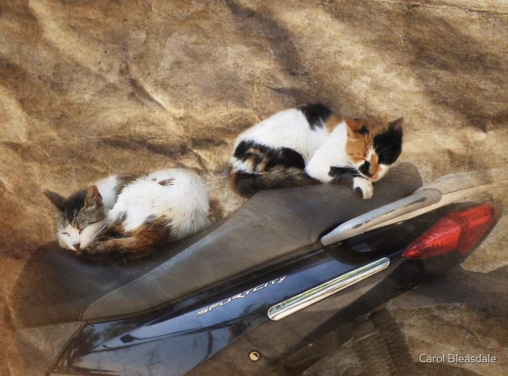 Kute Kitties of Kos by Carol Bleasdale
