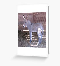 Less Than 24 Hours Old Greeting Card