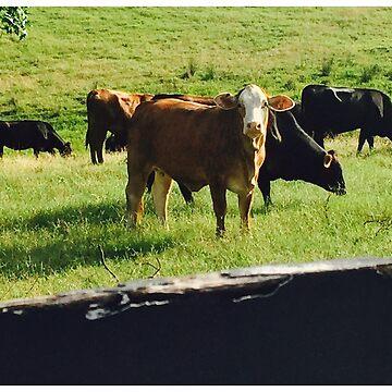 Cows Life by iluvmyragdolls