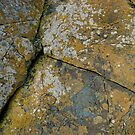 Cracked Natural Weathered Rock Texture with Lichens by LoraMaze