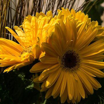 Three Sunshine Yellow Gerbera Daisies by GeorgiaM