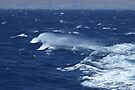 Windy day at sea by Themis