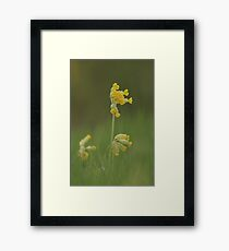 Cowslip blooming in a trio of Three Framed Print