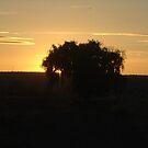 Black Tree by becca2425