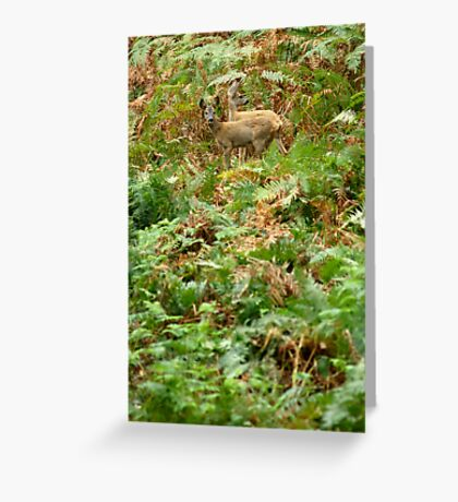 Roe deers in the fern Greeting Card