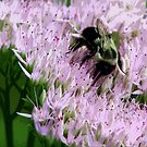 Pollinator2 In PS by DottieDees