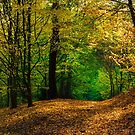 Fast Herbst von brimel55