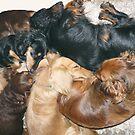 Let Sleeping Dogs Lie by Ree  Reid