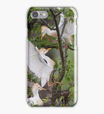 Cattle Egrets in Dispute iPhone Case/Skin