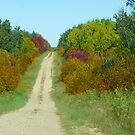 Country Road in Autumn by MaeBelle