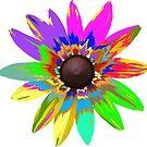 wunderschöne bunte Blume, Regenbogen, Blüte, Natur von rhnaturestyles