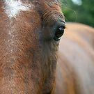 horses by Lisa Hildwine