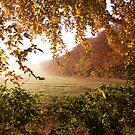 Golden Leaves by diveroptic