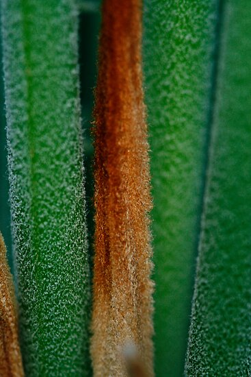 Cycad by Jules Campbell