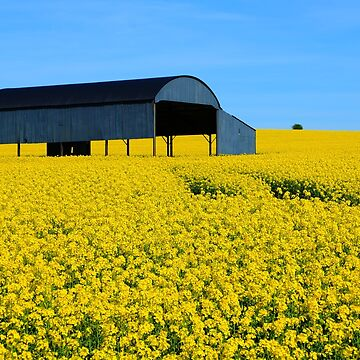 Yellow by leizure