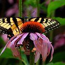 Garden Greetings by Lois  Bryan