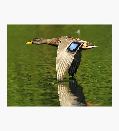 Wing Tip Control Photographic Print