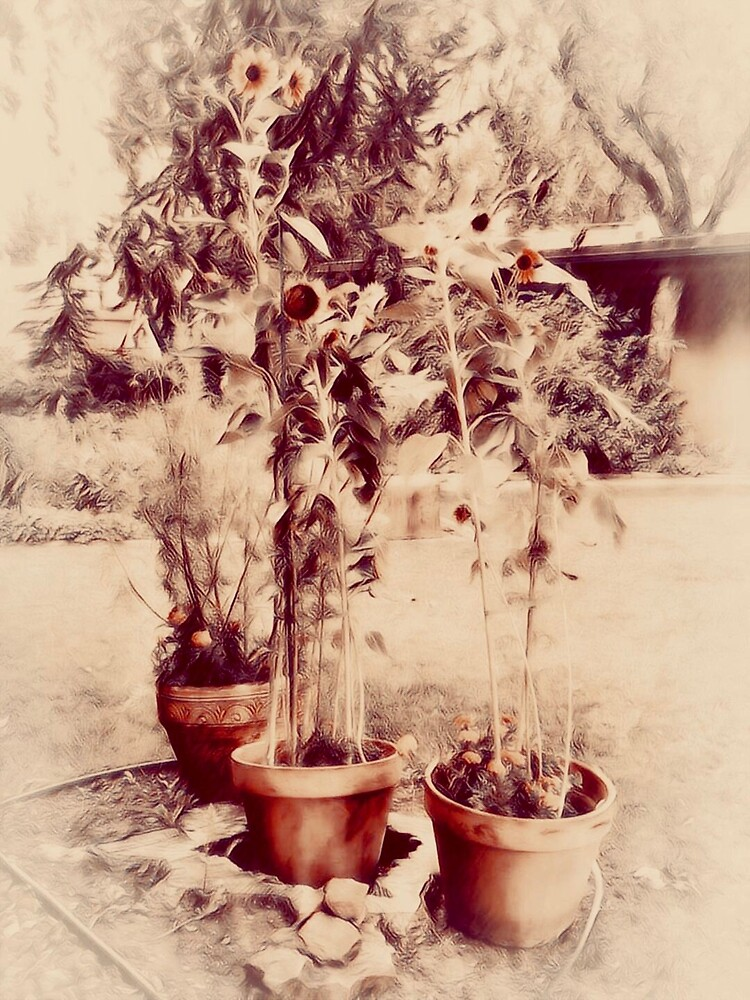 Potted Sunflowers, Taos, New Mexico Creative Vignette by EricaRobbin