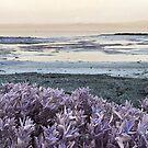 Beach at Rickett's Point by Roz McQuillan