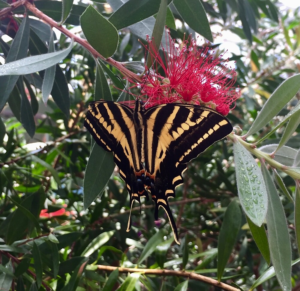 Black and Yellow Butterfly by EricaRobbin
