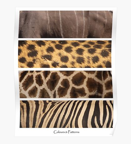 African Patterns Poster