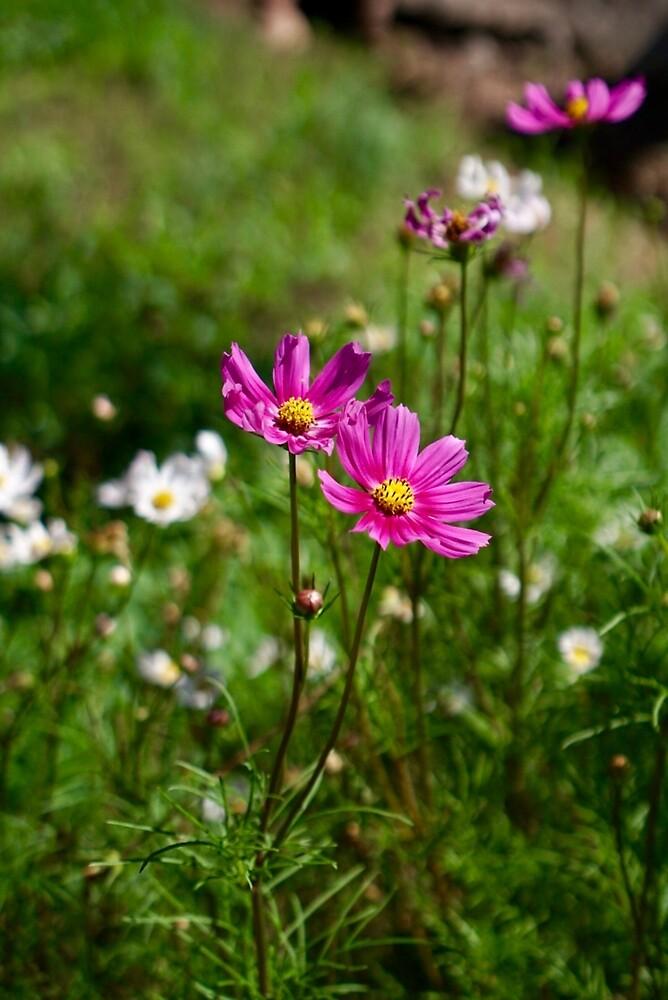 Wild Flowers by EricaRobbin