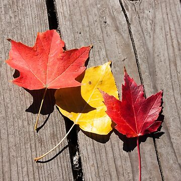 Three Leaves Photography Print by griffingphoto