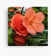 ORANGE TUBEROUS BEGONIA Canvas Print
