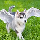 Angel puppy by Mariann Rea