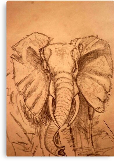 AFRICAN ELEPHANT - PENCIL SCHETCH by Magriet Meintjes