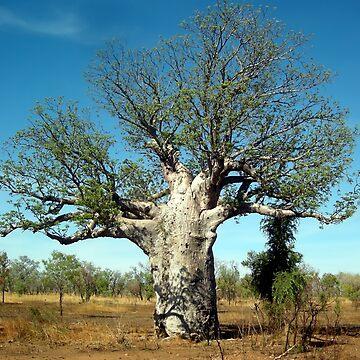 Baobab Tree by V1mage