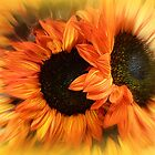 THE SUN FLOWERING by Elaine Bawden
