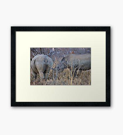 THE WHITE RHINOCEROS  COUPLE - Ceratotherium simum Framed Print
