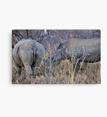 THE WHITE RHINOCEROS  COUPLE - Ceratotherium simum Canvas Print