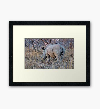 THE RHINOCEROS - Ceratotherium simum Framed Print