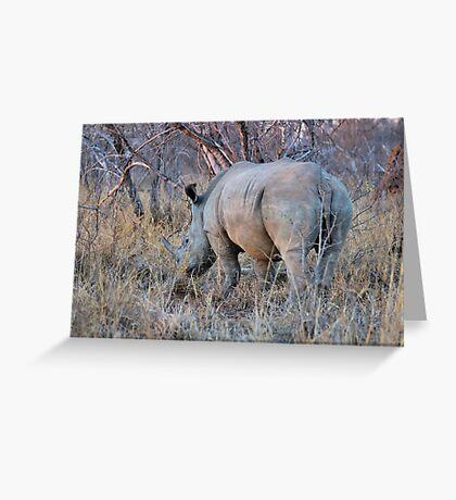 THE RHINOCEROS - Ceratotherium simum Greeting Card