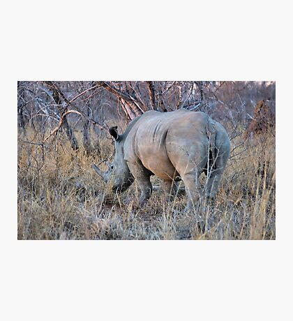 THE RHINOCEROS - Ceratotherium simum Photographic Print