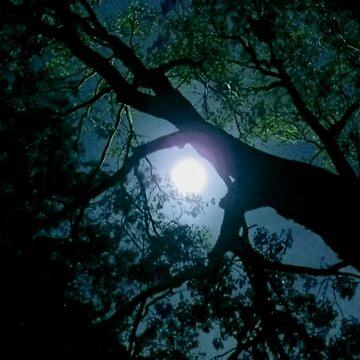 Full Moon Arbor by V1mage