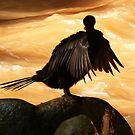 cormorant II by Bernhard Matejka