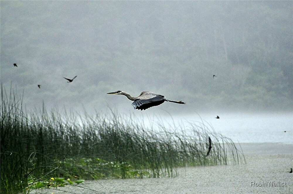 Heron at Lagoon by Robin Nellist