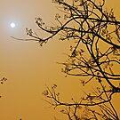 Queensland dust storm by feeee